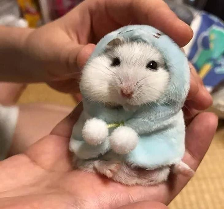 Pets in Winter Attire hamster in a winter coat