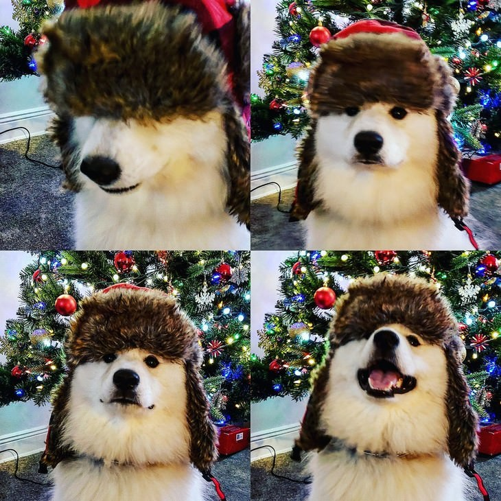Pets in Winter Attire dog in a hate in front of a christmas tree