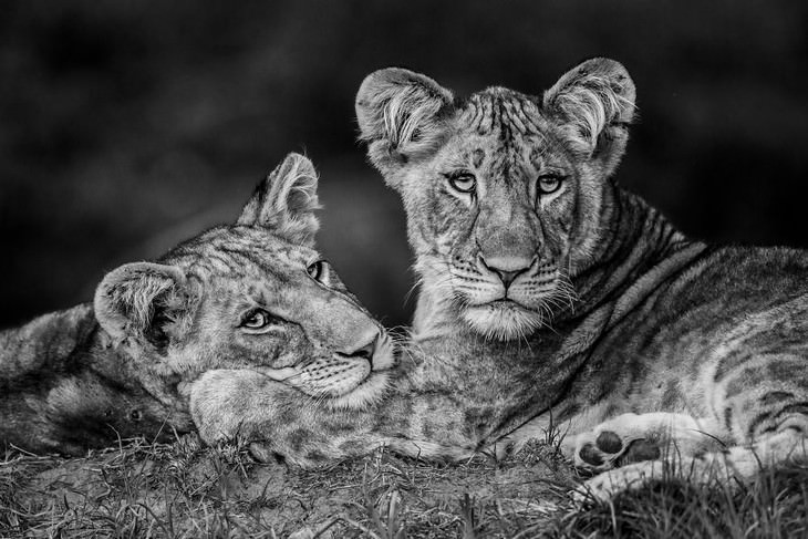 2019 Nature Photographer Of The Year winners and notable mentions Luke Massey