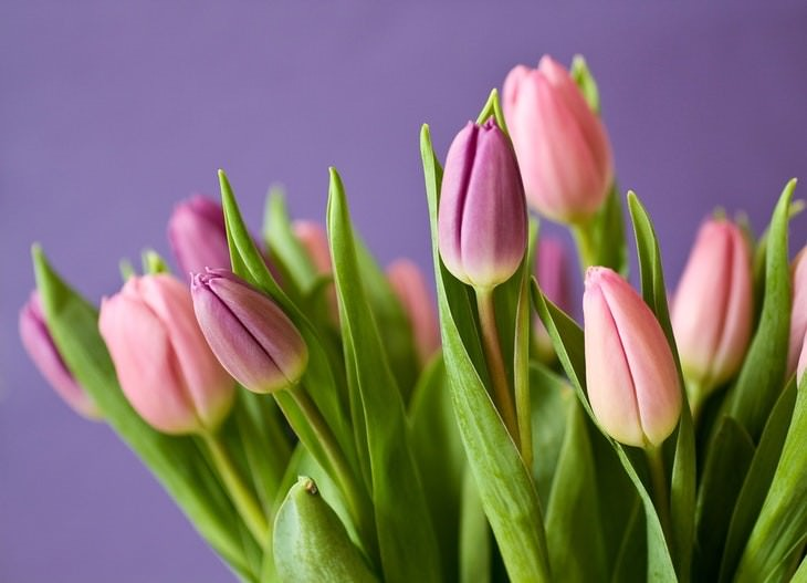 cat care tips pink tulips