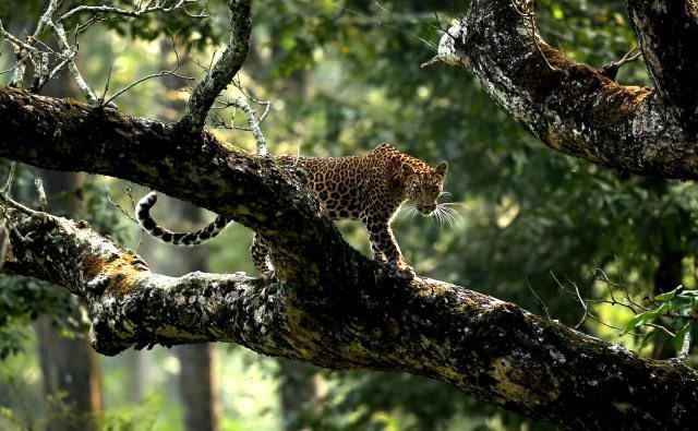 award winning photos - cheetah on a tree