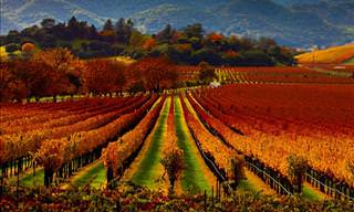 Wine Guide: Wine region