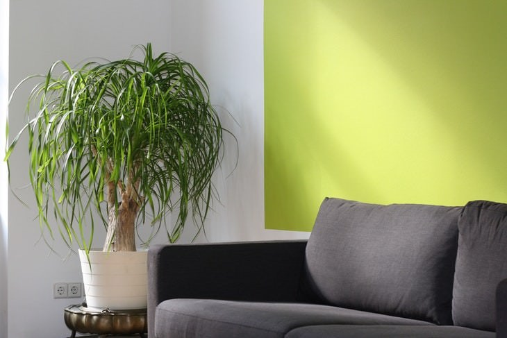 Furniture Cleaning Mistakes couch and plant