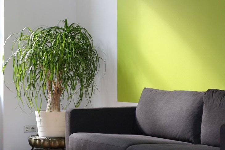 1. Colocar plantas de interior encima o demasiado cerca de tus muebles