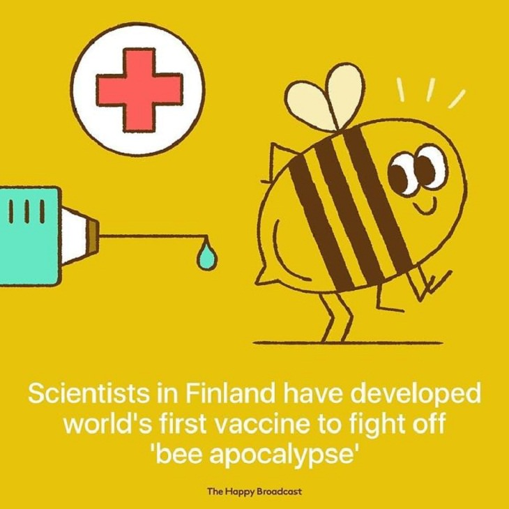 Positive Headlines bees