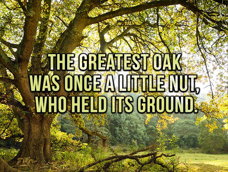 The Greatest Oak Was Once A Little Nut