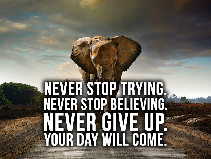 Never Stop Trying. Never Stop Believing.