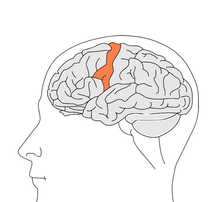 pain and sleep primary somatosensory cortex