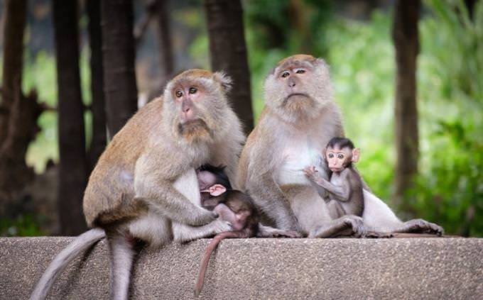 Animal vocabulary test: monkeys