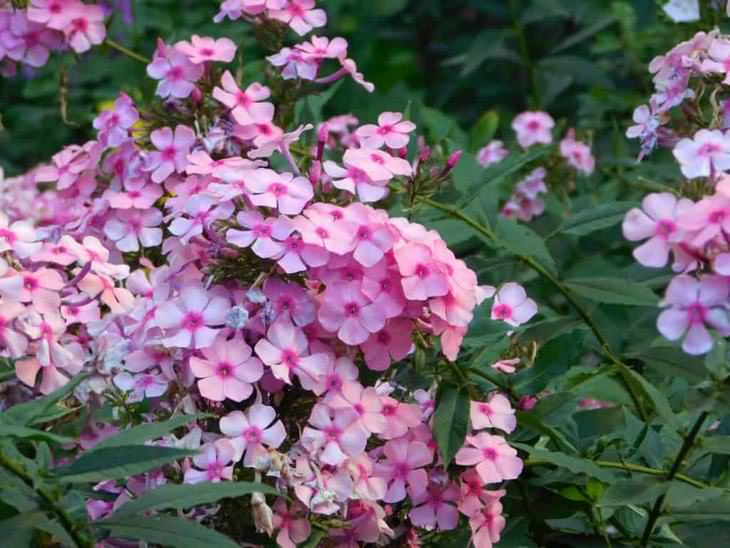 10 Best Evergreen Ground Cover Plants