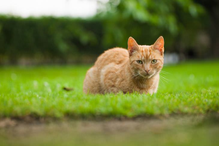 Keep Cats Away From Your Garden