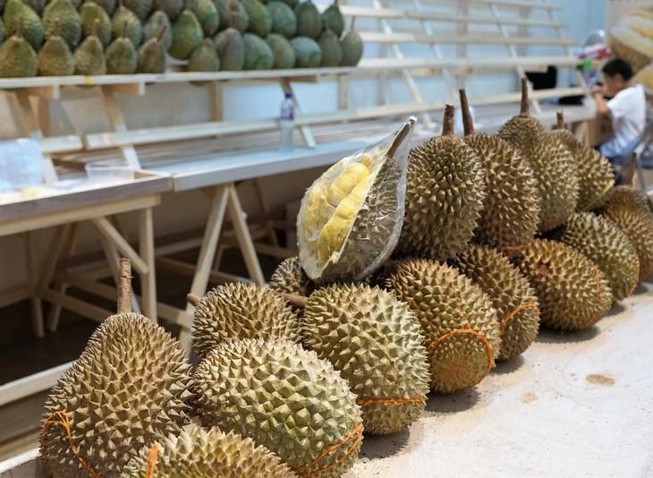exotic fruit Durian