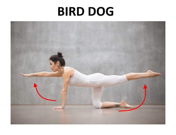 pelvic floor exercises bird dog