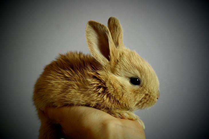 Bunnies: tiny