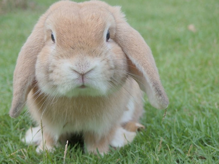 Bunnies: droopy