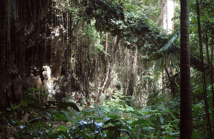 Barbados: Welchman Hall Gully