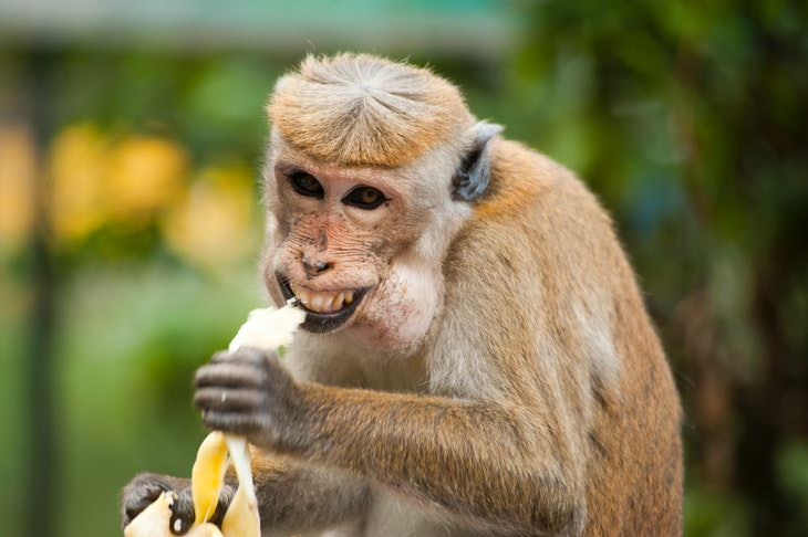 worrying coping habits funny monkey