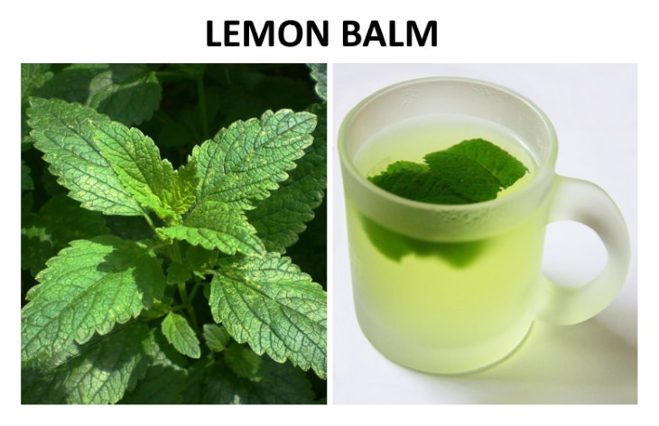 herbal teas that relieve bloating  Lemon Balm (Melissa officinalis)