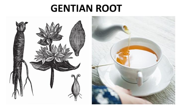 herbal teas that relieve bloating  Gentian Root (Gentiana lutea)
