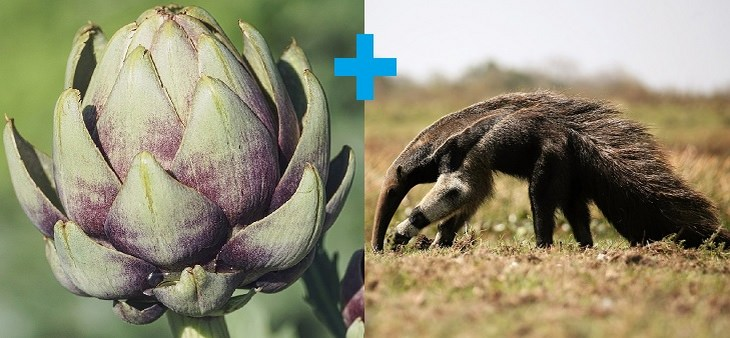 Pangolin: artichoke