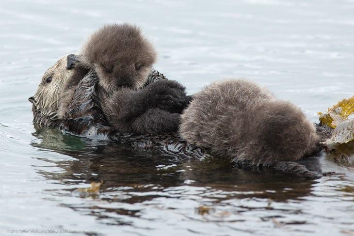 Polar animals: otter