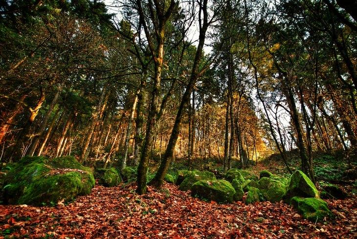 Portland: Forest Park