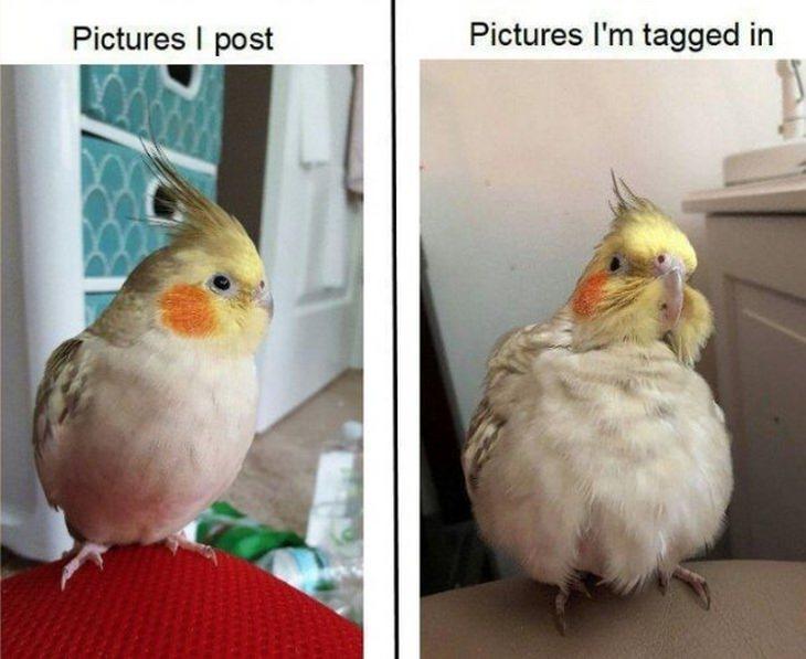 Funny birds: tagged
