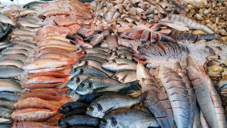 fish types