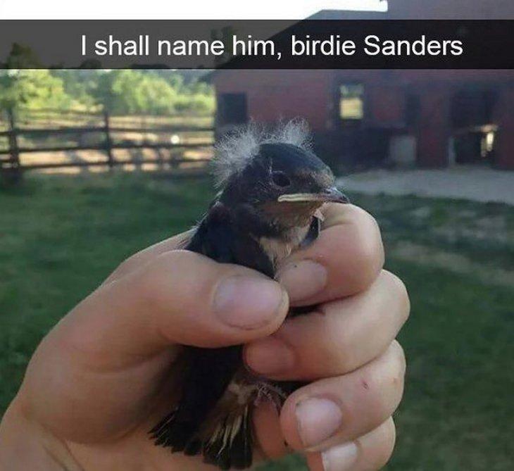 Funny birds: Sanders