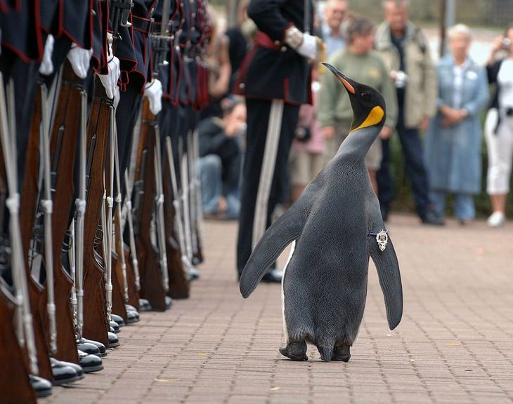 Strange Facts: Nils Olav
