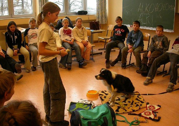 Dogs working: classroom dog