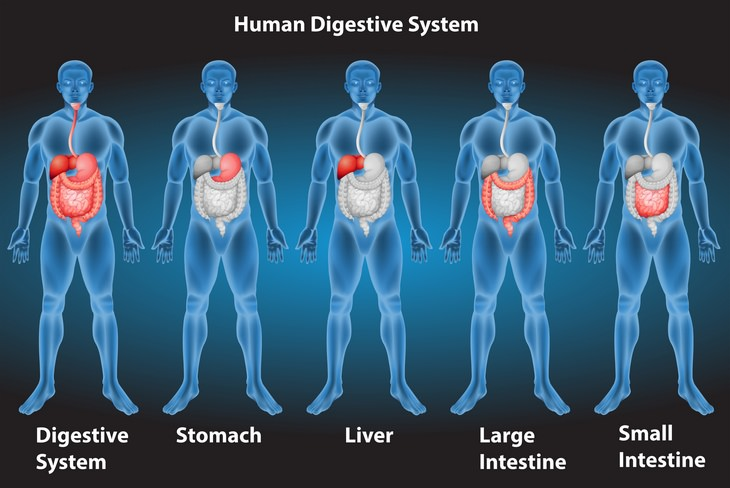 Microbiome test: digestive tract
