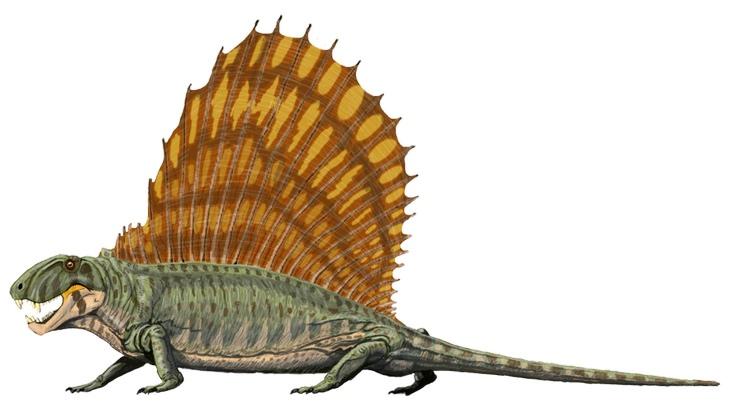 Strange prehistorical animals: dimetrodon