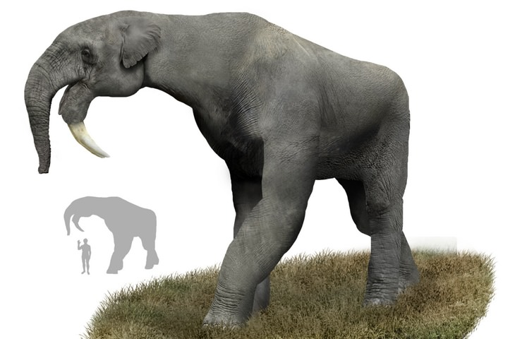 Strange prehistorical animals: deinotherium