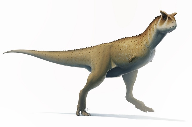 Strange prehistorical animals: carnotaurus