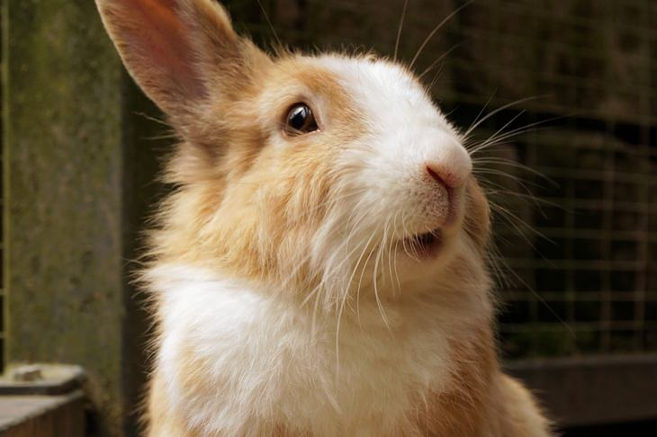 Beautiful pets: rabbit