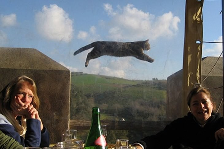 funny moments captured on camera cat flying