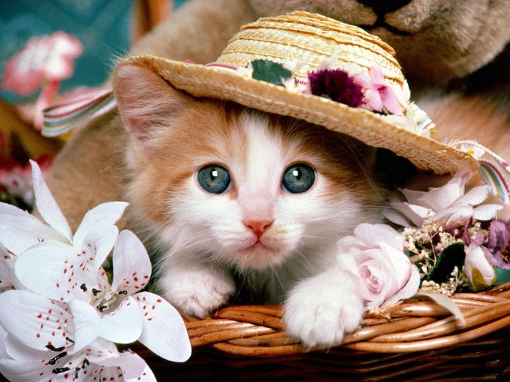 cute animals with hats