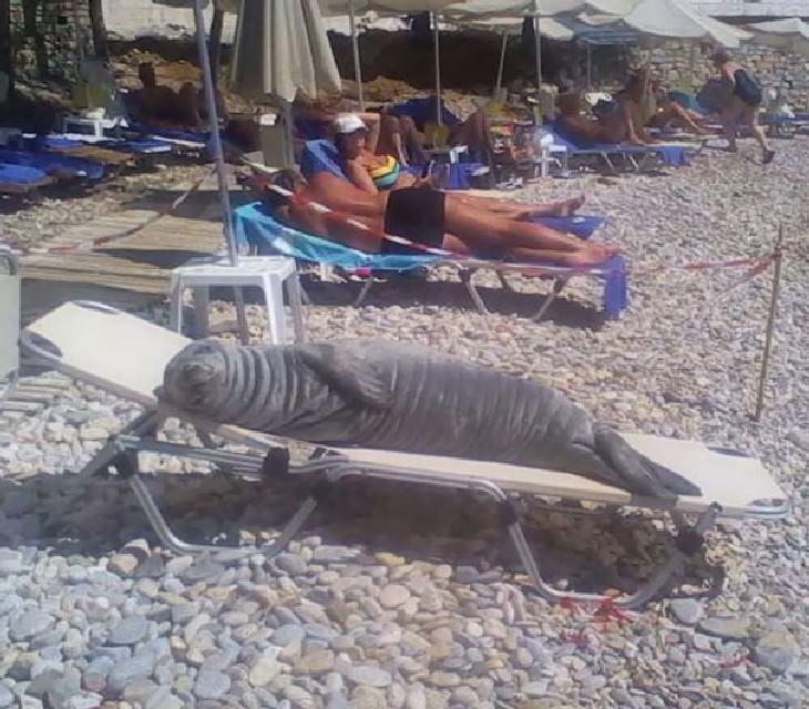 hilarious beach photos seal on the beach