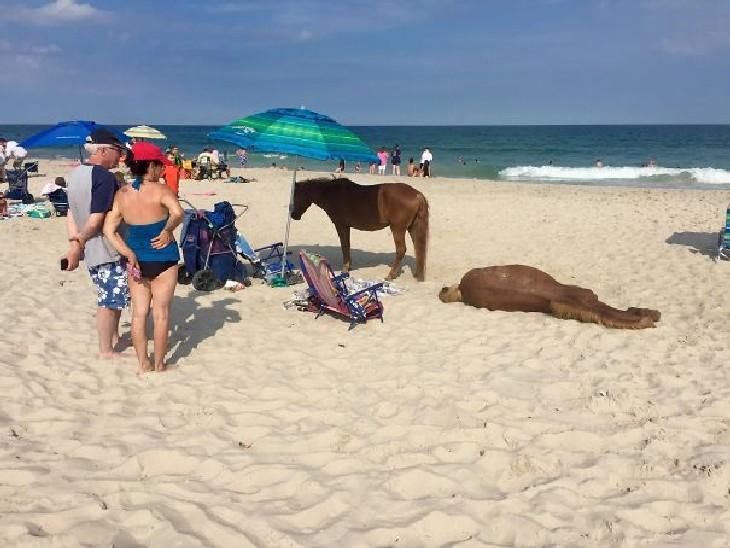 hilarious beach photos wild ponies at the beach