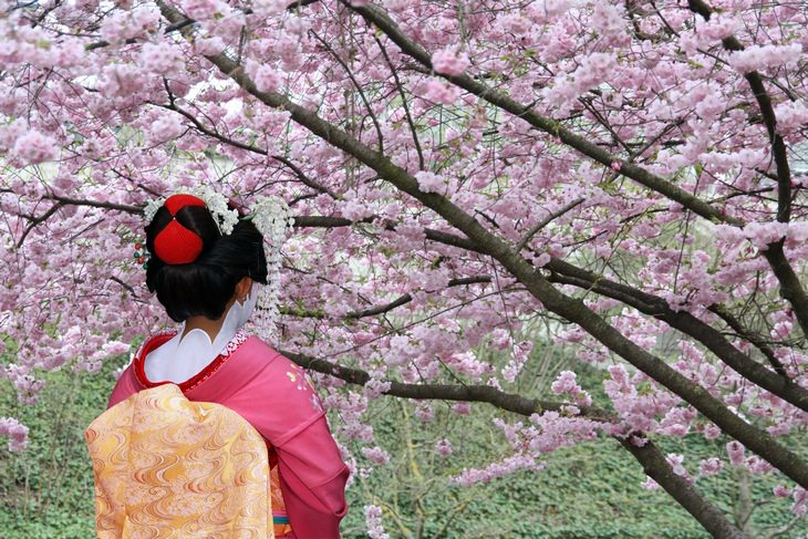 Japan travel tips: cherry blossom