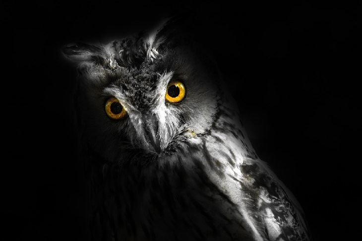Night owls: owl