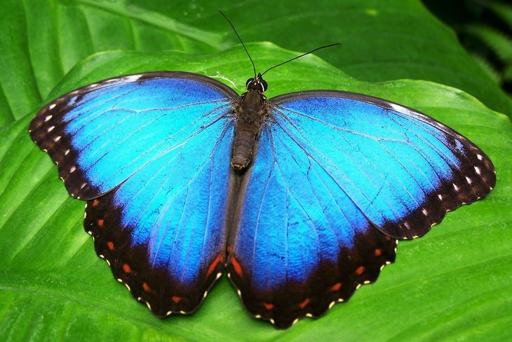 Animal myths: butterfly