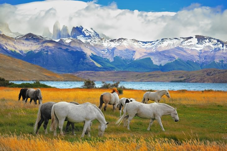 Torres del Paine National Park landscape with horses
