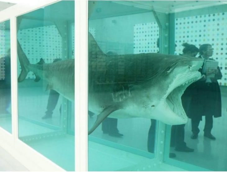 most expensive items stuffed shark