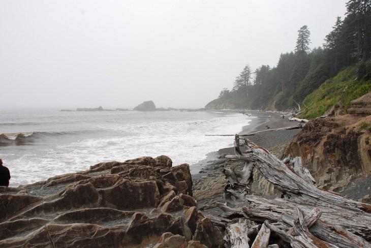 Driftwood sculptures: Washington coastline