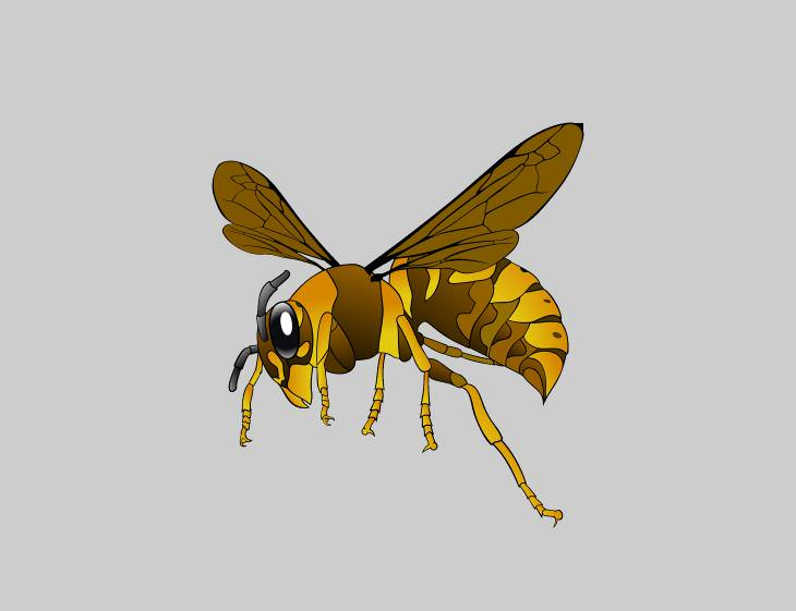 arthropods and medical research Wasps
