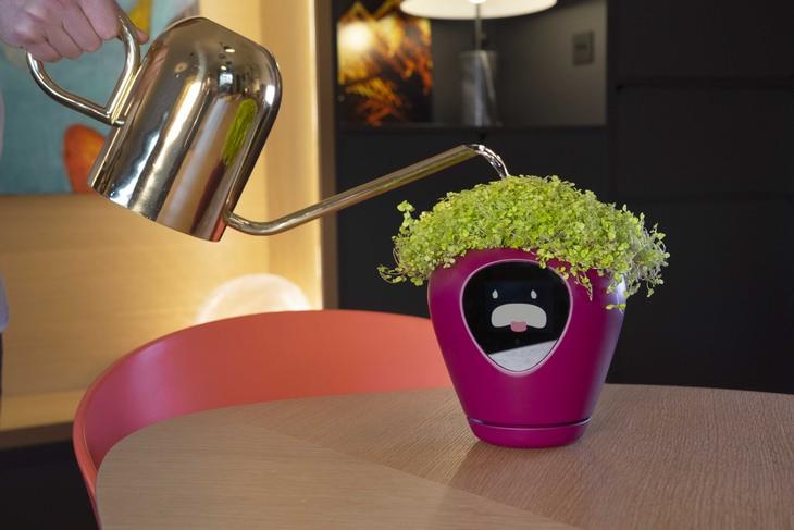 Smart planter: thirsty