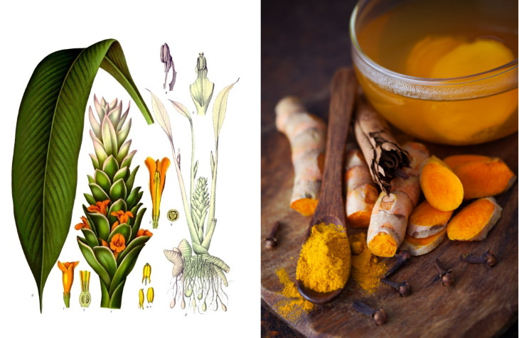 teas to lower inflammation Turmeric Tea (Curcuma longa)