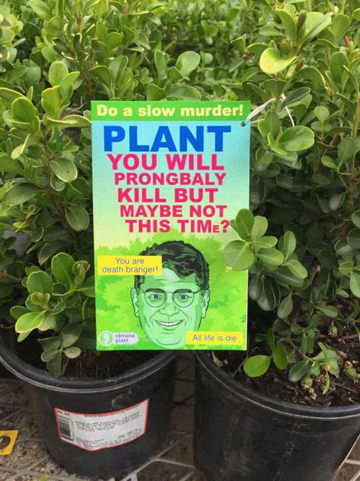 obvious plant plant murder